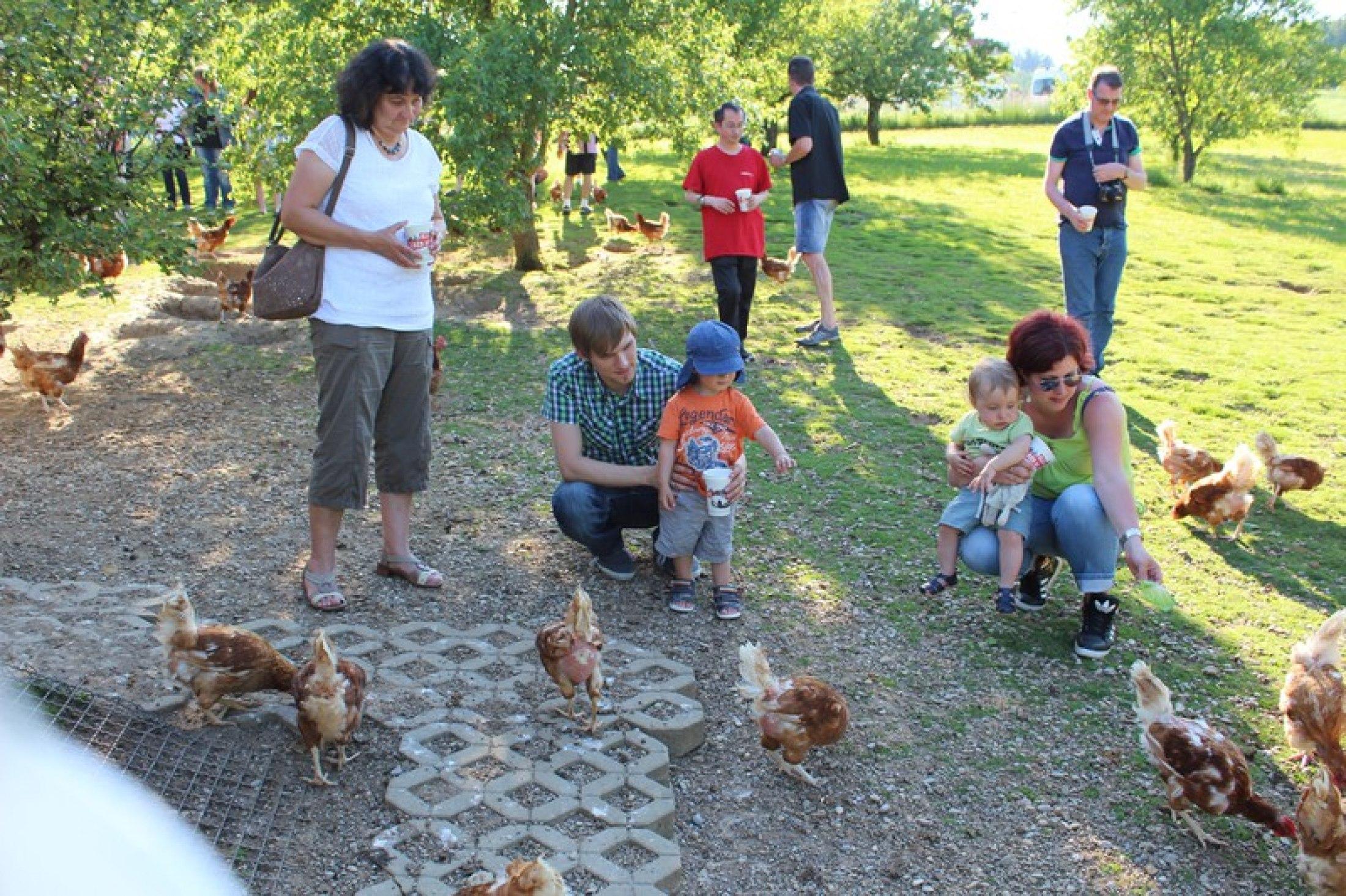 Hühnerfütterung auf dem Hof von Anton Krieger